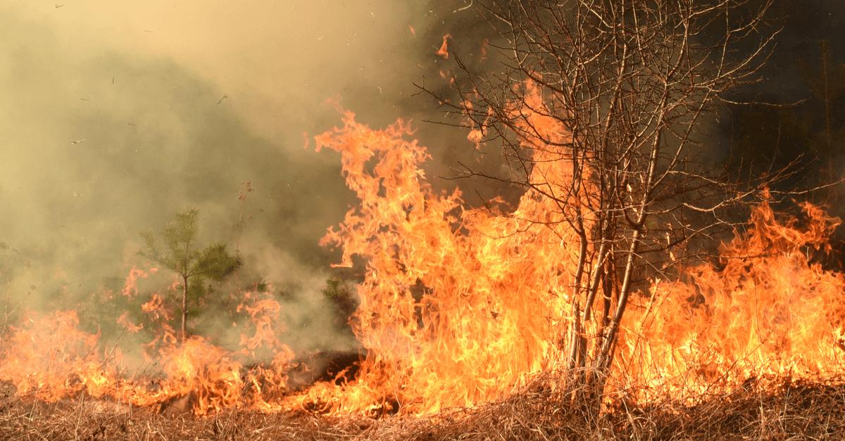 Été 2021 : un trop lourd bilan en incendies - Il faut réagir !