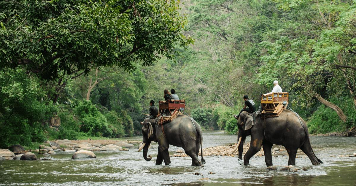 Pour la protection des éléphants d'Asie en voie de disparition!