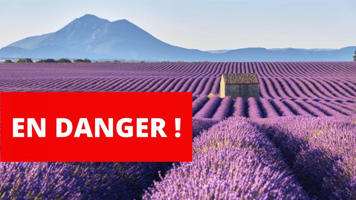 NON au projet européen de destruction des huiles essentielles !