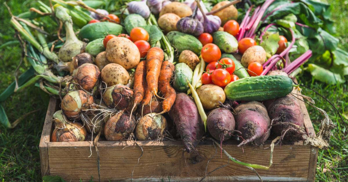 Récupérons de toute urgence notre souveraineté alimentaire régionale !
